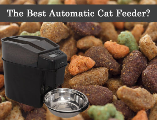The Best Automatic Cat Feeder!